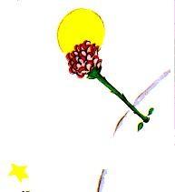 گل شازده کوچولو